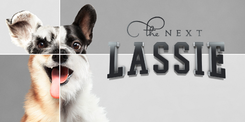 Lassie_500x250