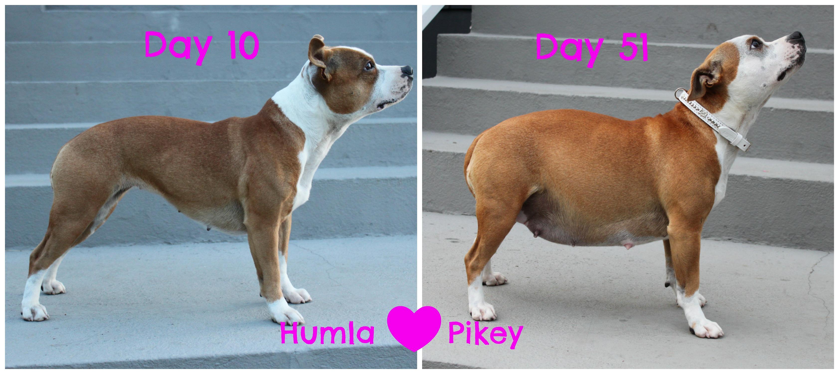 humlaxpikey