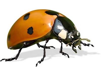 ladybug-lg-400x266