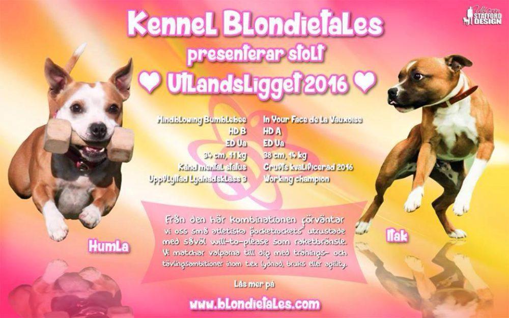 Blondie & Baileys